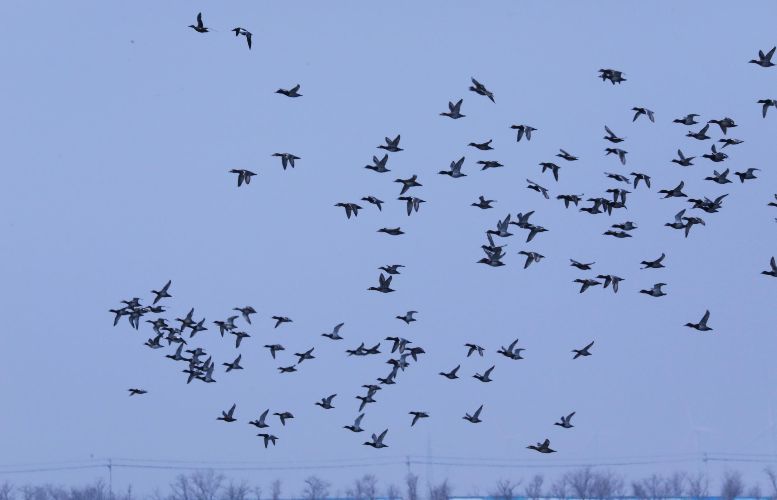 【视频】沧州:南大港湿地和鸟类自然保护区风光无限