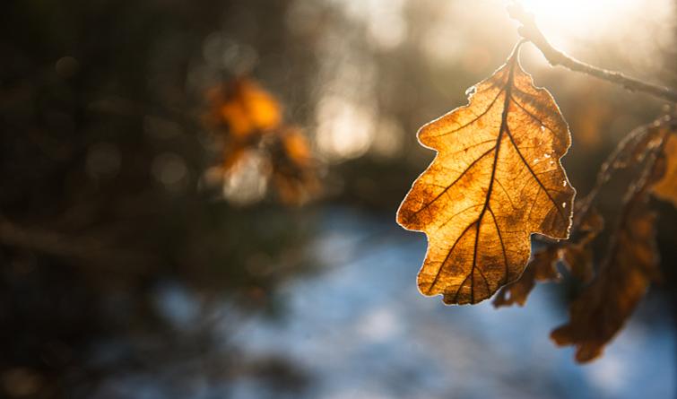 今日立冬|清霜冷絮裯,红叶满阶头 ……冬来了!