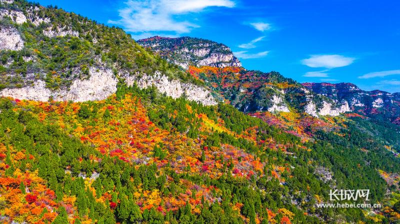 井陉仙台山:看万山红遍 层林尽染