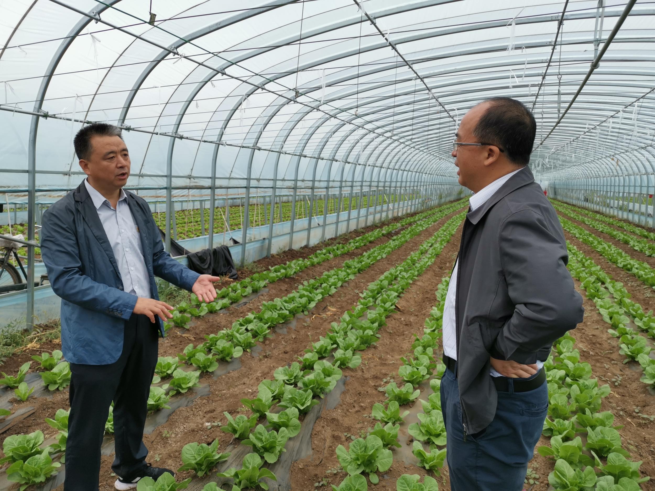 """万全""""3+2""""订单种植打造京冀协作蔬菜产业园"""