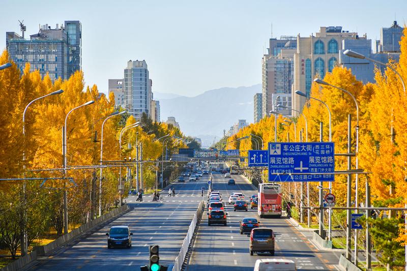 北京:又到一年银杏黄