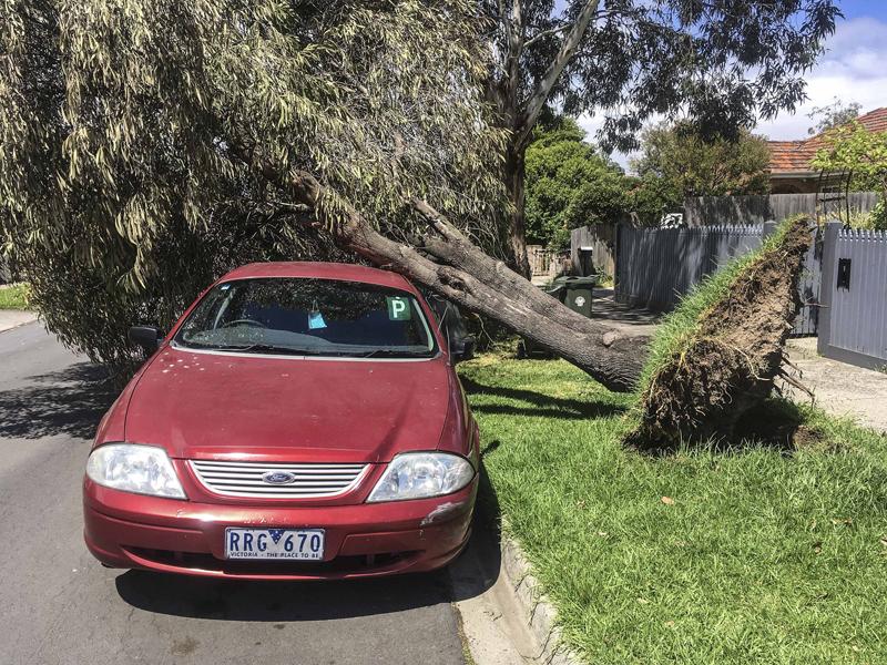 澳大利亚墨尔本大风吹倒树木