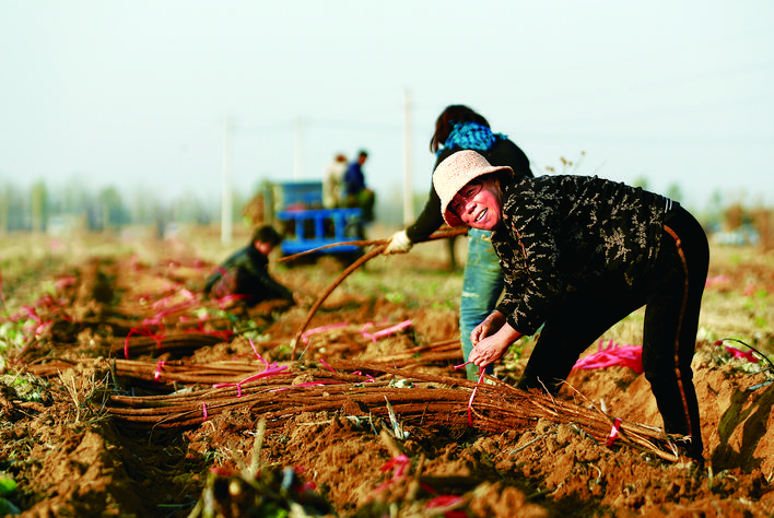 滦州市东安各庄镇鼓励支持各村拓宽致富渠道