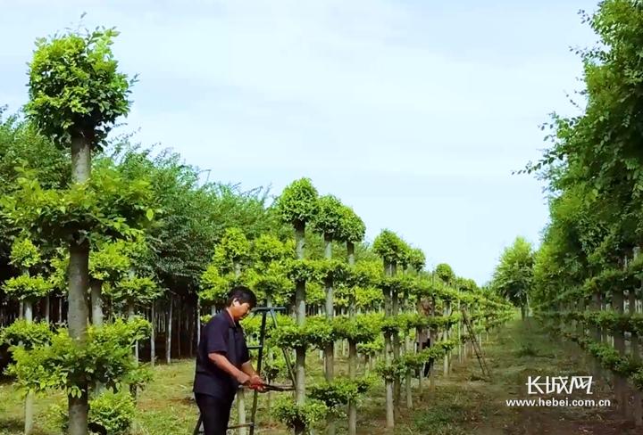 """【他们,在希望的田野上】系列报道②林业专家黄印冉:让榆树成为""""摇钱树""""的人"""