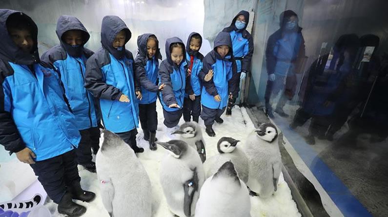 广东珠海:小学生零距离接触帝企鹅