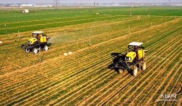 石家庄栾城区:加强冬小麦入冬管理
