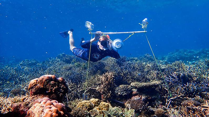 科学家在澳大利亚安装水下扬声器 或助受损的珊瑚恢复活力