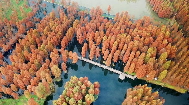 上海:冬日暖景