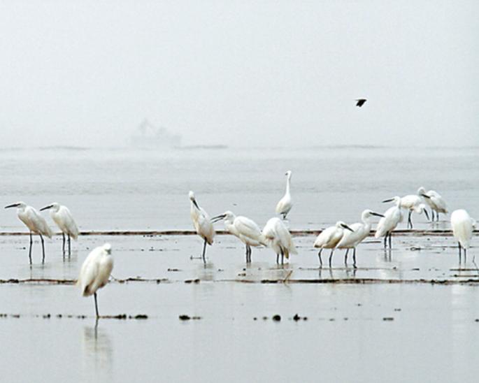 衡水湖 明年3月见