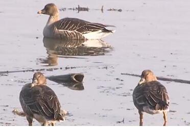 【生态文明@湿地】最佳观鸟期来临,万鸟齐飞尽显湿地壮美!