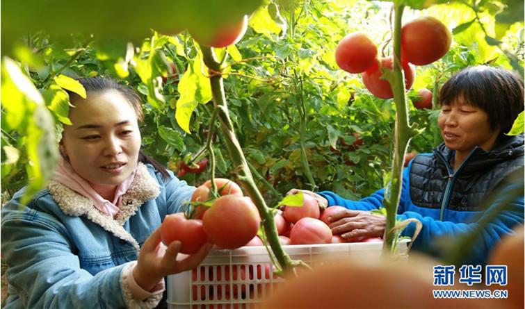 河北南和:党建引领助农增收