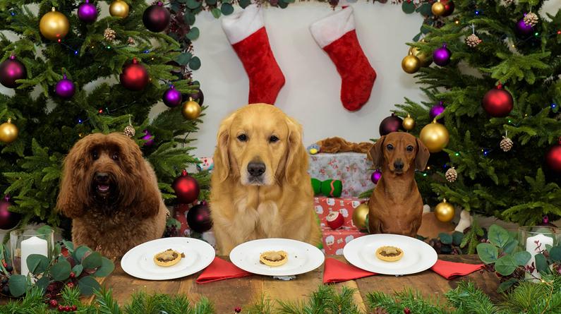 伦敦一餐厅推出狗狗圣诞大餐 宠物狗与主人一同欢庆圣诞节