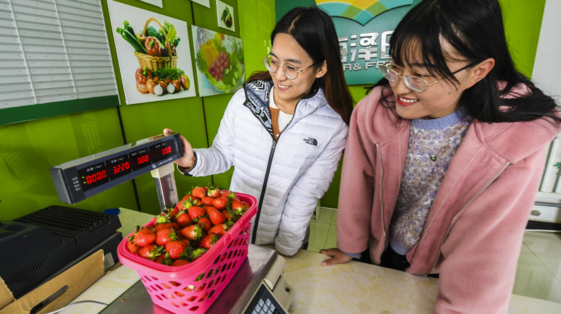 """河北永清:""""牛奶草莓""""乐游人"""