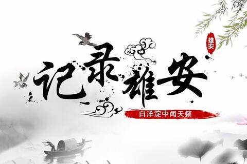 《记录雄安》第三集:白洋淀中闻天籁