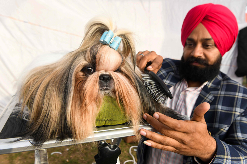 Dog Show in Amritsar, India
