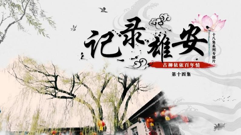 《記錄雄安》第十四集:古柳依依百年情