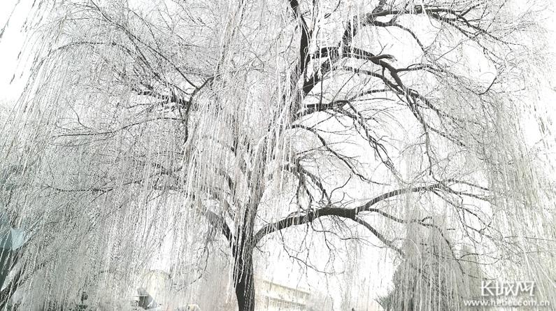 【高清组图】华北油城:树挂冰凌花 美爆整个城市