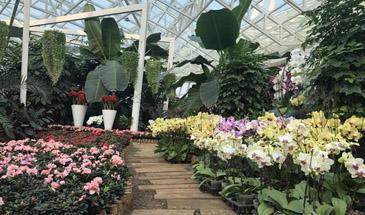 石家庄市植物园多项活动迎新春