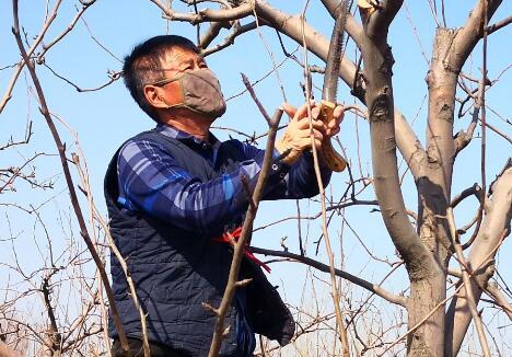 【高清组图】邢台市桥西区:做好疫情防控 开展春管春护