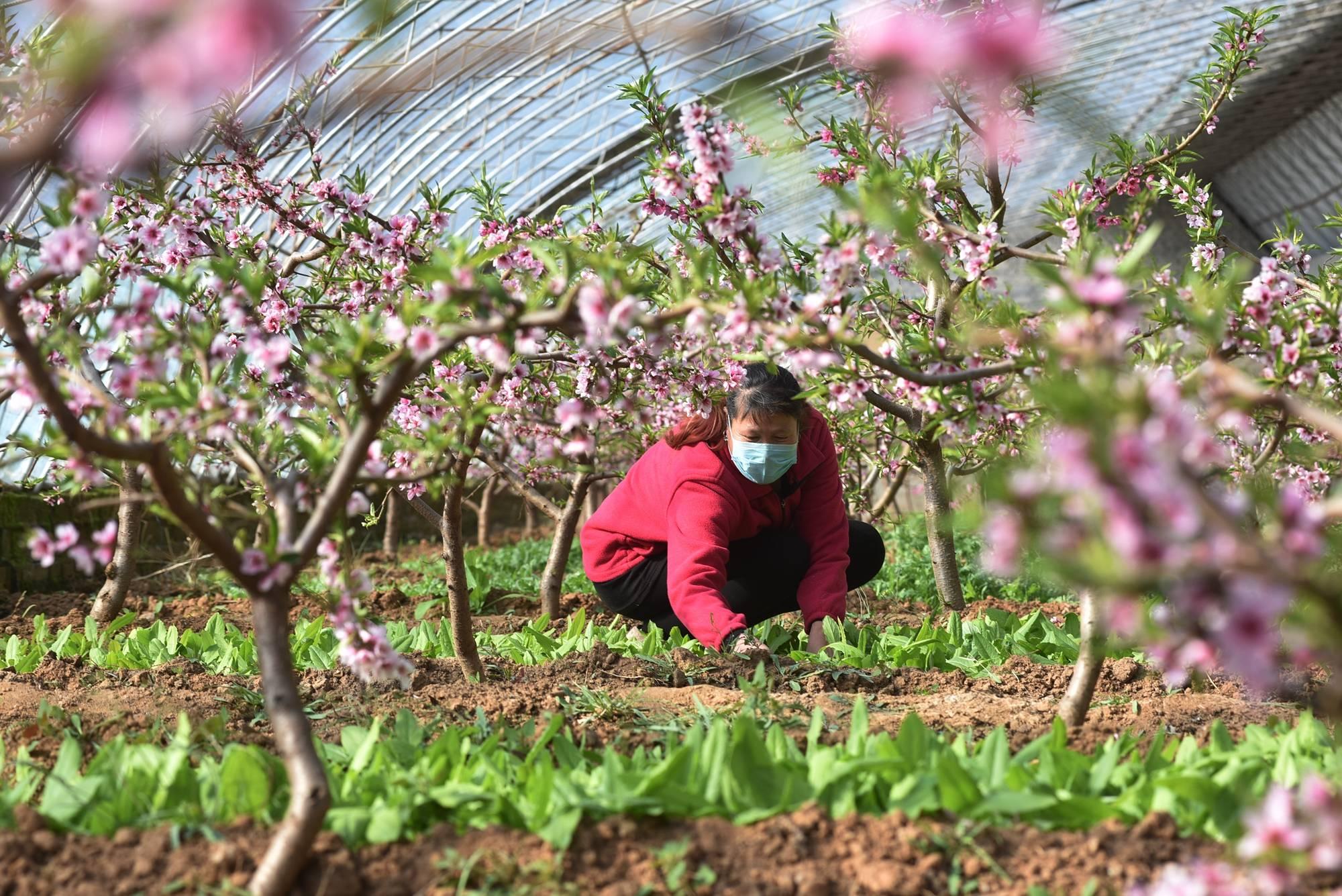 宣化区:抗疫情 抢农时