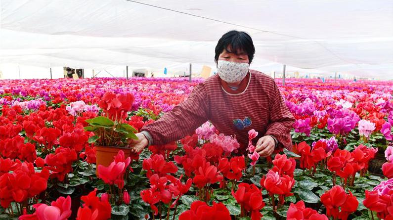 河北石家庄:抓农时 促增收