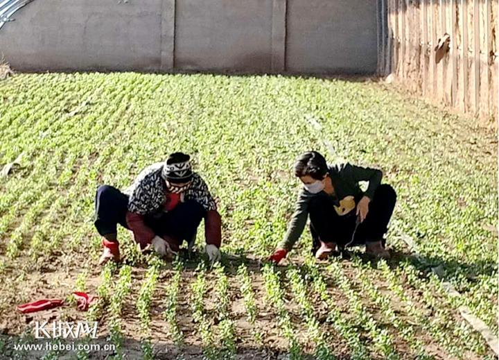 河北香河:防疫生产两不误 巾帼基地复工忙
