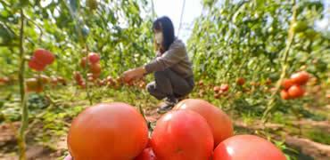 河北肥乡:扶贫产业复工复产促增收