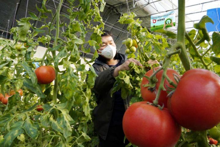 农业经营主体组团抗疫情农业产业化联合体尽显其能