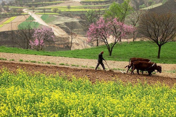 中国各地一手抓疫情防控,一手保春耕备耕