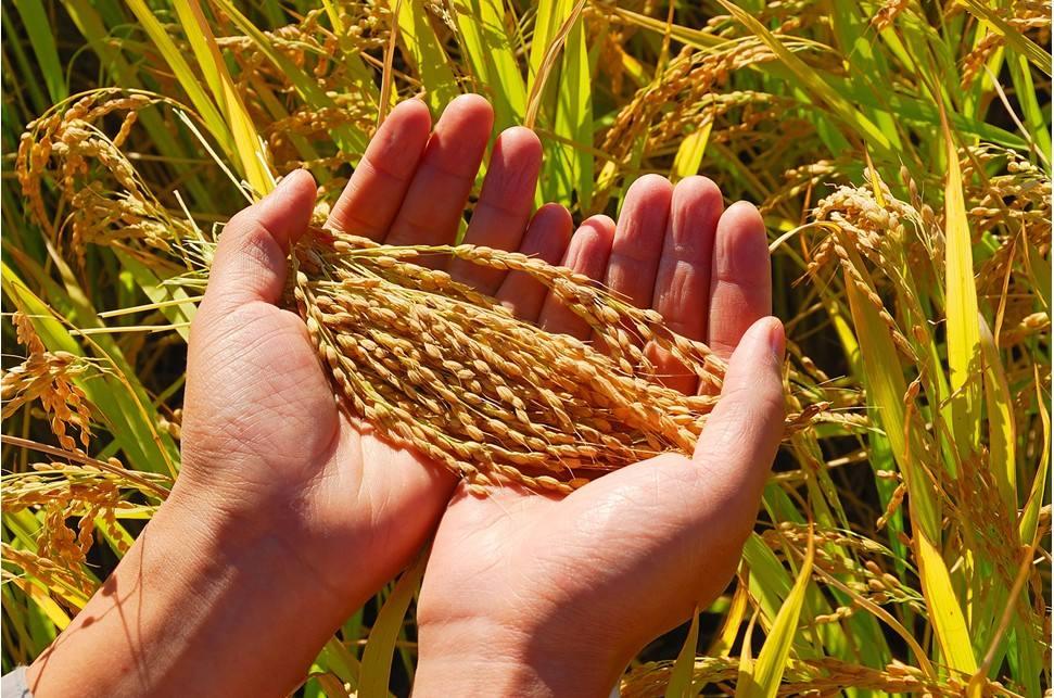 粮食产量5年稳定在1.3万亿斤以上今年继续稳字当头