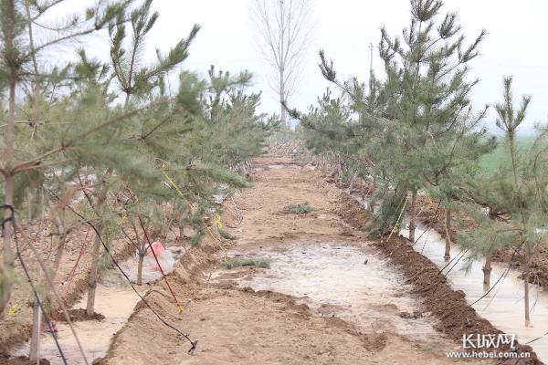 【记者走基层】永年抢抓时令全面推进造林绿化