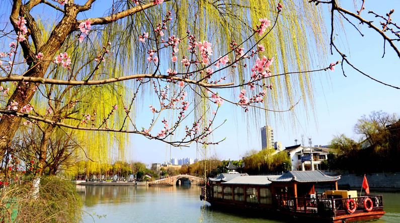 苏州:姑苏三月春意浓 桃红柳绿花枝俏