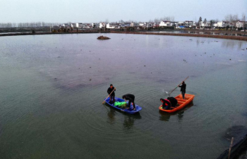 安徽五河:春日養蟹忙