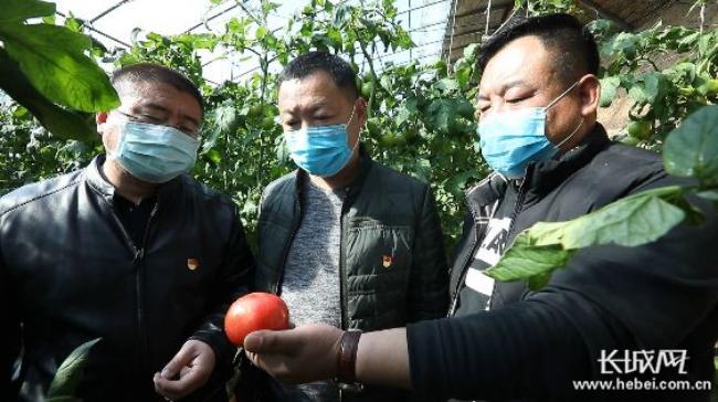 """平泉市84名驻村第一书记冲锋在战""""疫""""战贫一线"""