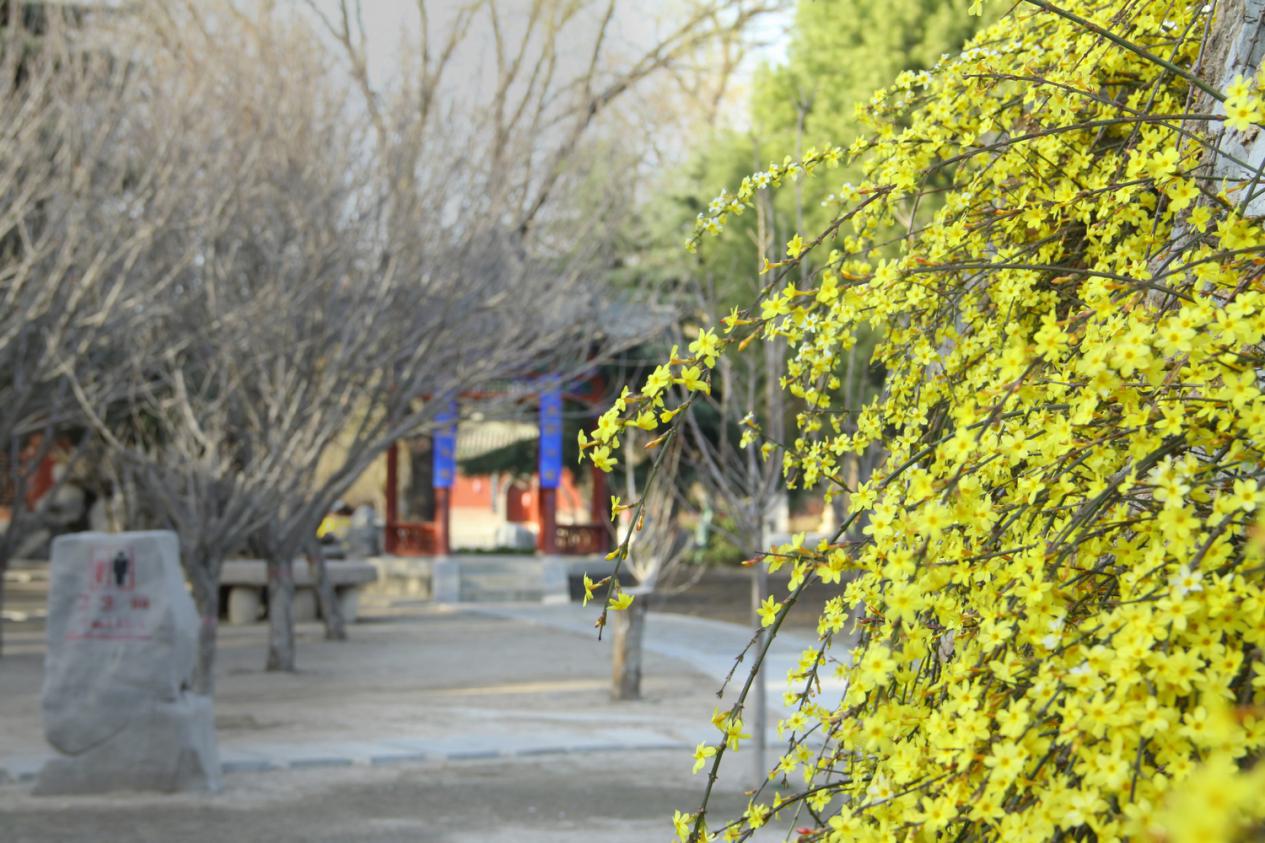 高清大图丨春到隆兴寺