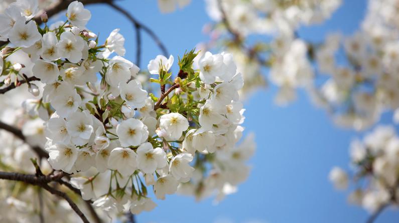 南京玄武湖公园各类春花绽放 风光无限好