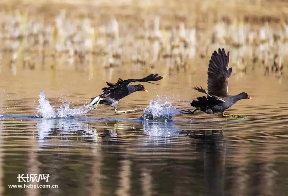 保定北湖公园:湖光春意浓 赏鸟正当时