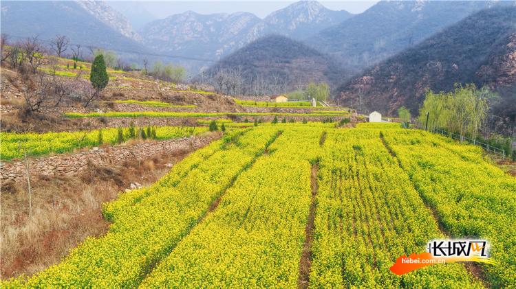航拍丨山谷中的油菜花梯田