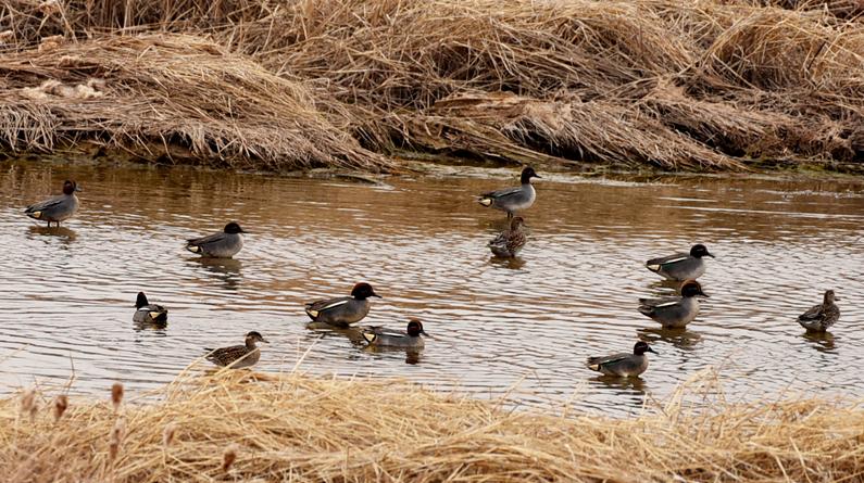 """河北张家口:洋河湿地成候鸟""""乐园"""""""