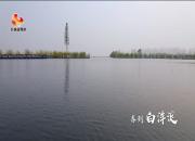 微视频 | 春到白洋淀