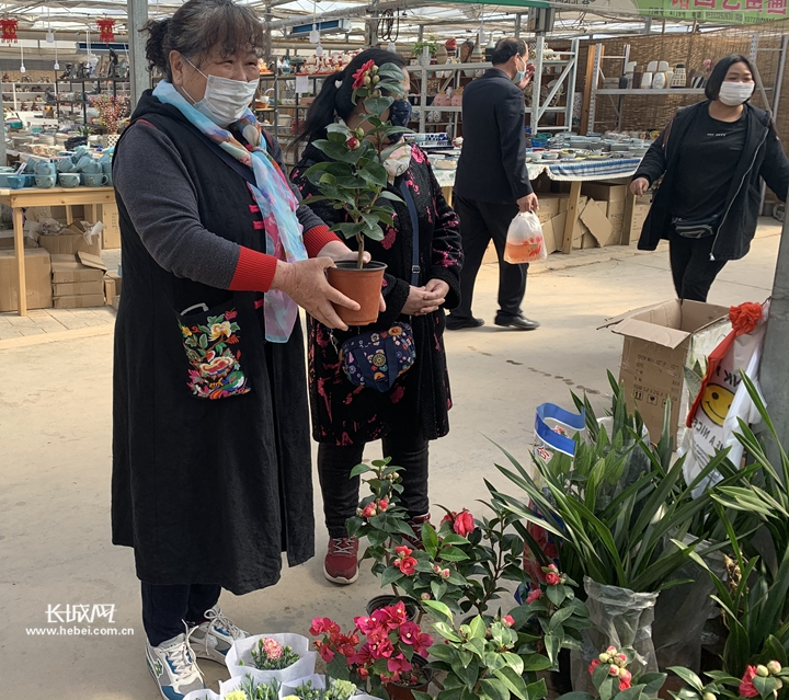 石家庄花卉市场:心花鲜花一起开