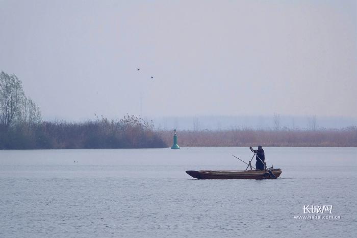 """让淀水""""活""""起来!河北近2年向白洋淀补水9亿立方米"""