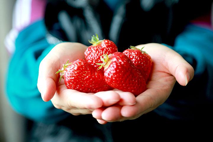 冀东油田爱心人士助革命老区售卖滞销草莓