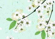 梨花自寒食 又是一年春