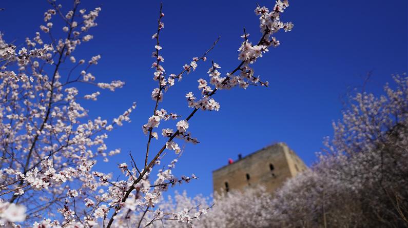 河北迁安:春到燕山花吐芳