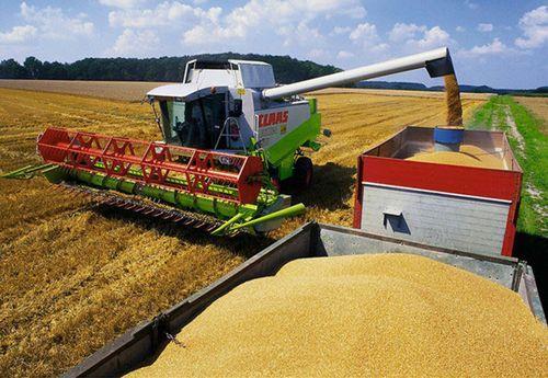 中国粮食储备充足价格稳定国际市场对我国供应影响小