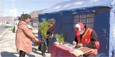 满城古稀老人捐8000棵树苗助力绿色清明