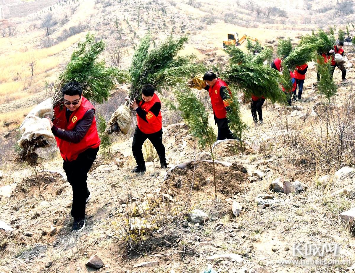 河北永年:党员志愿者让荒山披绿装