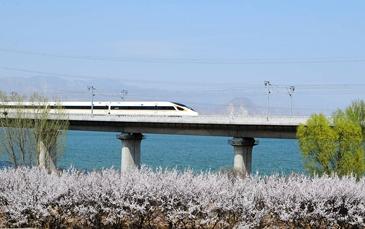 怀来:列车在花海中行驶