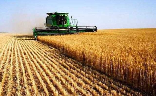 警惕投机资本炒作粮食市场